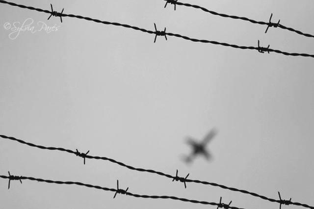freedomphoto
